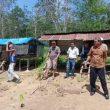 Masyarakat Tj.Beringin Manfaatkan Lahan Disbun Yang Diduga Piktif