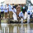 Plh Bupati Rokan Hulu Restoking Benih Ikan Niken Di Bendungan Desa Menaming
