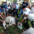 BKM Nurul Iman Desa Hutaimbaru – Paluta , Sembelih 9 Hewan Qurban